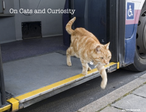 Cats and Curiosity